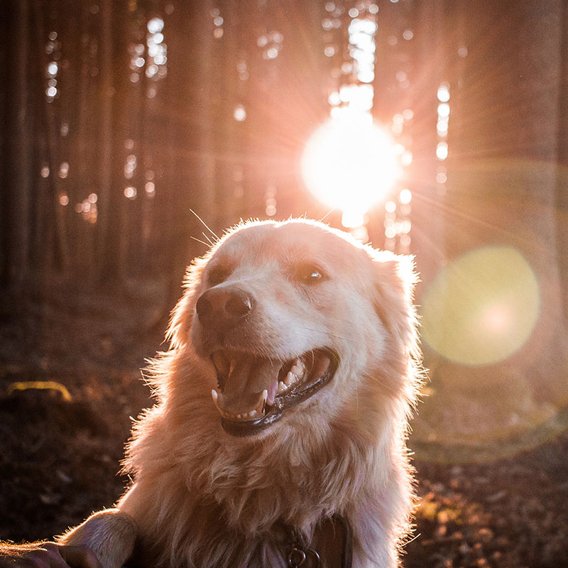 Cours chien bordeaux reeducation comportementale
