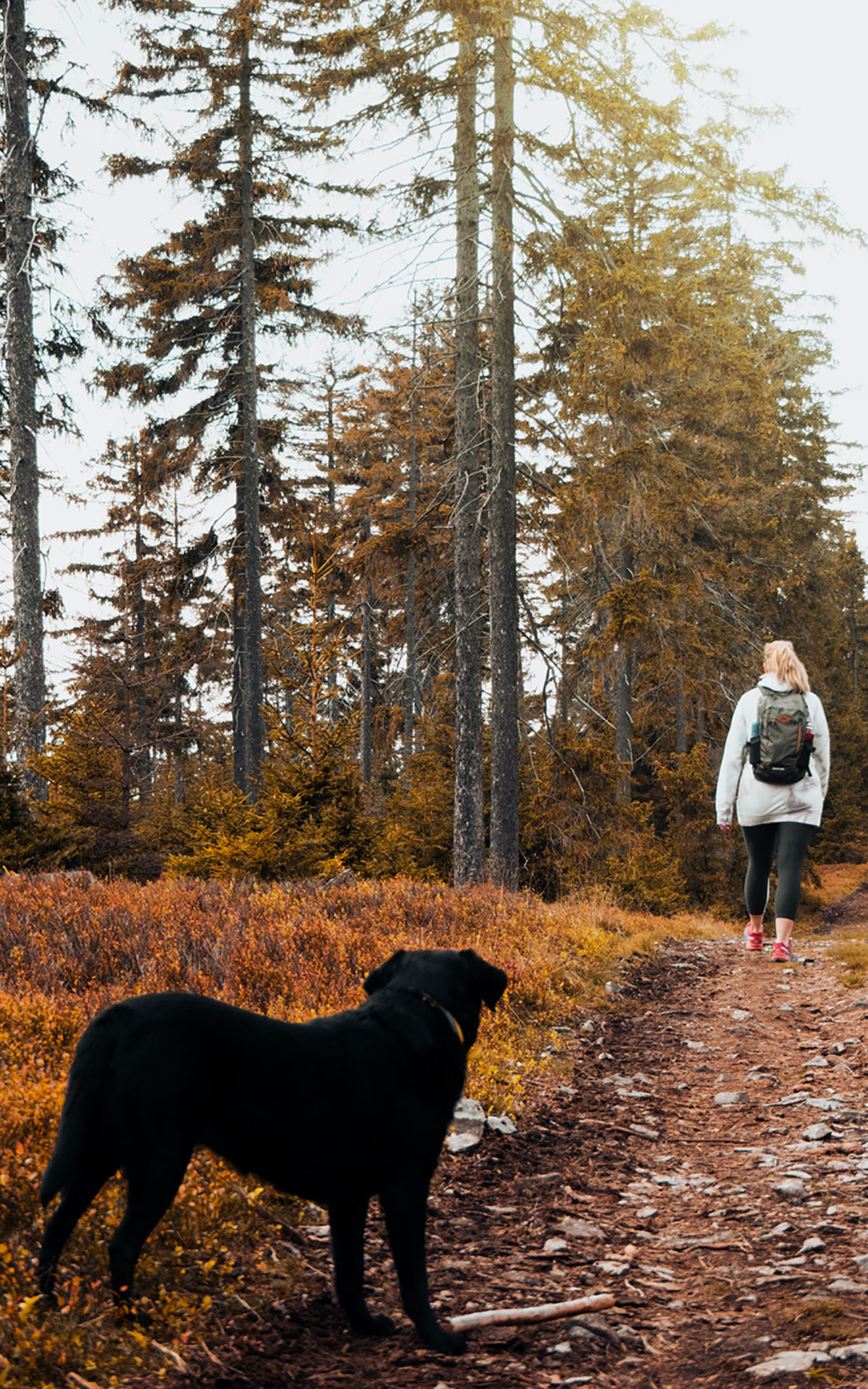 Balade éducative comportementaliste canin bordeaux