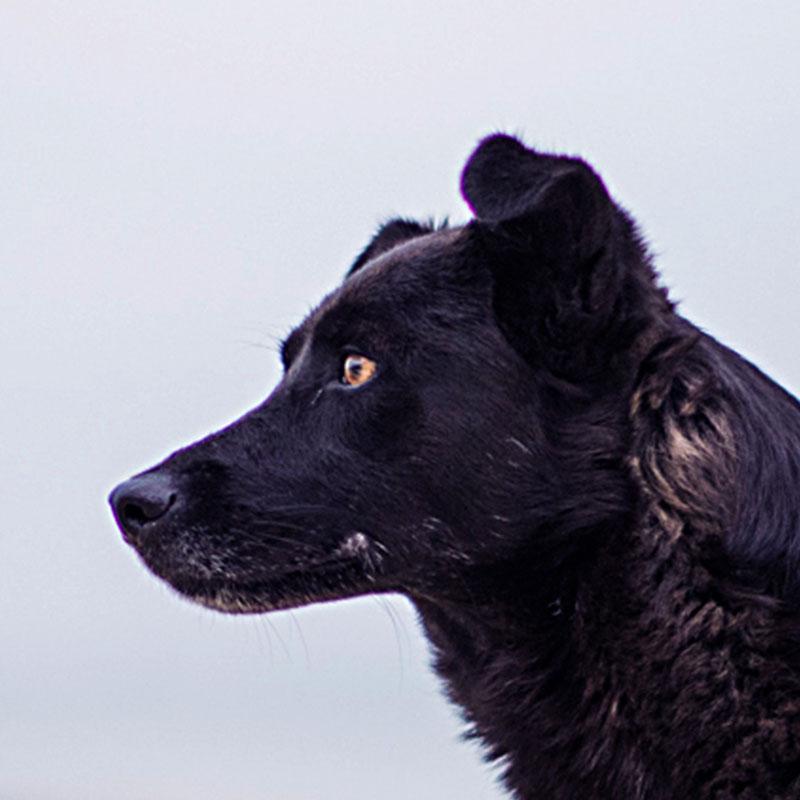 Cours éducation canine chien bordeaux
